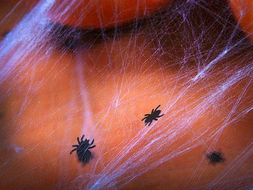confetti-spinnen